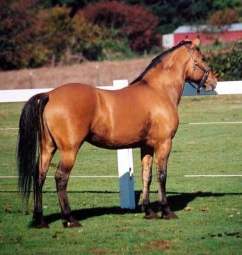 springwater station kiger mustang breeder kiger breeding and stallions for sale 348x368
